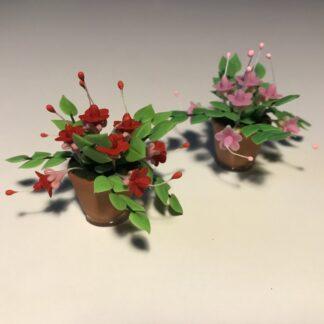 Fuchsia i ler urtepotte