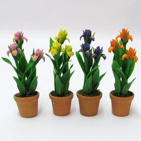 Iris i keramik urtepotte